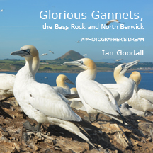Front cover of Glorious Gannets, the Bass Rock and North Berwick book by Ian Goodall